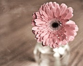 Spring Photography romantic nature Flower Photo rustic for her women art wall decor light pink brown peach gerbera daisy photograph print