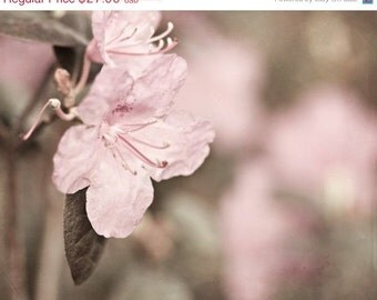 Pink and Brown - 8x10 Fine Art Print