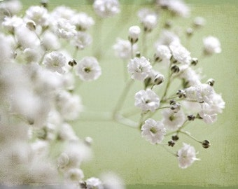 Spring White winter women under 50 mint cream frost ice snow shabby chic light green babys breath - Fine Art Photography Print