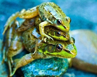 Frog Photography Fathers Day Dad nature summer Frogs dude men children kids boy under 10 funny humor 3 three green blue color fun - Fine Art
