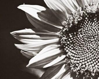Black and white Photography monochromatic romantic nature macro home decor wall art grey gray dark flower sunflower - Fine Art Photograph