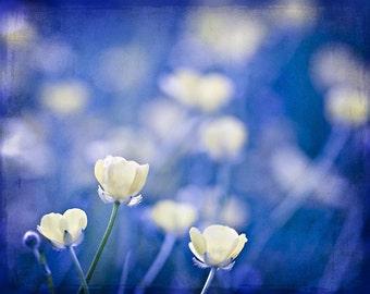 Nature Photography flowers Cobalt blue color citrine under 50 for her women home decor wall art yellow romantic summer soft - Fine Art Photo