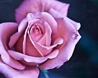 The Rose - 5x7 Fine Art Print