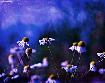 Ready to ship Flowers cobalt blue under 10 25 for her women mustard yellow white romantic - ACEO (mini print) - Fine Art Photography Print