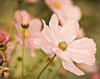 Golden 2 - 8x10 Fine Art Photograph