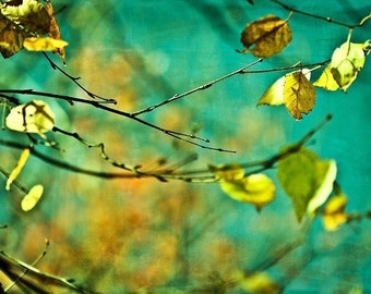 Nature Photograph Harvest Fall autumn photography wall art decor gold golden leaves mustard green turquoise yellow blue men dude for him art
