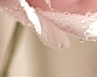 Macro Photography pink flower home decor wall art Women Pink Shabby Chic romantic photograph faded pale water drops rain spring - Fine Art