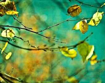 Autumn fall leaves turquoise mustard green yellow gold golden citrine men dude women - Autumn - Fine Art Photography Print
