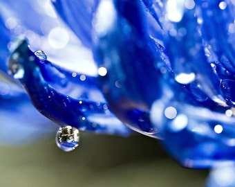 Abstract Photography macro Cobalt blue rain water drops wall art home decor romantic sparkles white green flower petals - Fine Art Print