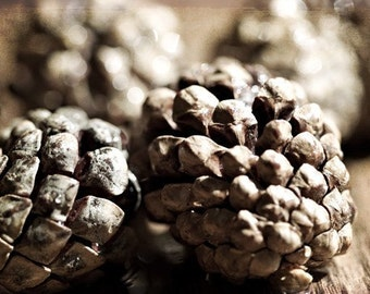Nature Photography macro Summer Fall Autumn dark brown men dude pinecone texture woodland woodsy camping honey sparkly - Fine Art Photograph