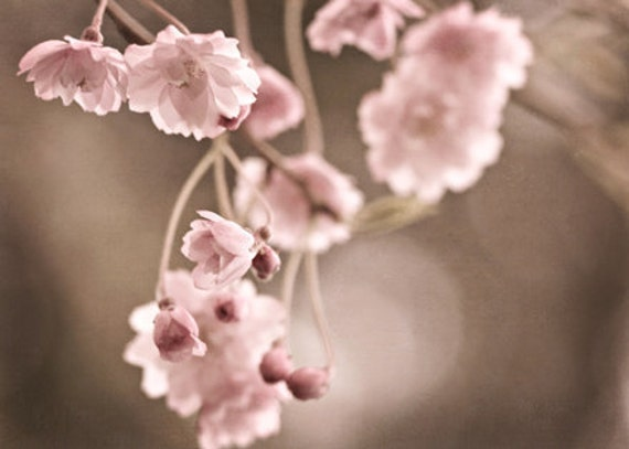 Nature Photography Macro romantic photo spring blossoms blooms decor wall art Pink light pale for her tan brown little flowers soft teamt