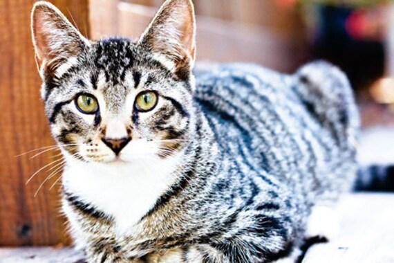 tom cat mac