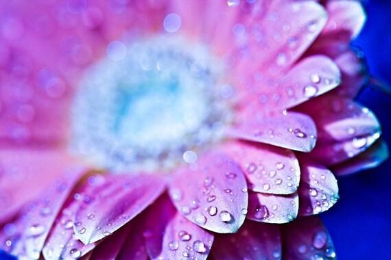 Pink - 5x7 Fine Art Photograph