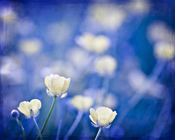 Items Similar To Nature Photography Flowers Cobalt Blue