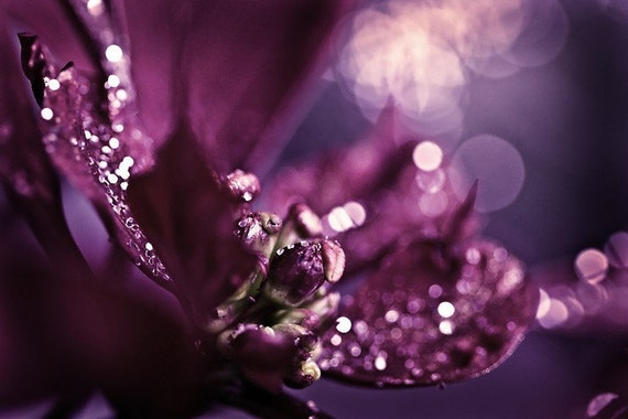 Abstract Photography macro Sparkles home decor wall art purple plum sparkly romantic dark women spring elegant - Fine Art Photograph Print