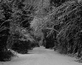 Winter Snowy Landscape Photograph - 10x8 - Christmas, woods, black and white, forest, trees