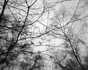 Black & White Trees - Genuine Lomography Photo - 8x8 - nature, woods, forest, canopy, sky, gray, dark, darkness, gothic, creepy