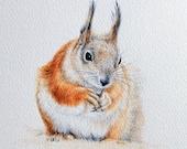 Red Squirrel, original artwork in watercolour