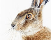 Brown Hare Leveret - original artwork in watercolour