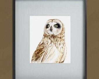 Short-Eared Owl (portrait) original artwork in watercolour