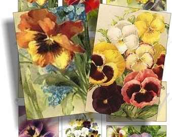Beautiful pansy images for cards, ACEO, ATC, scrapbook and more Digital Collage Sheet 3 X 2 inch No.284
