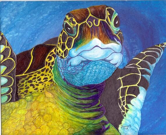 Sea Turtle..Hawksbill Turtle..5