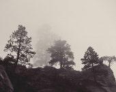 Nature, landscape, Black and white, angels landing, weather, rock, tree, zion, national park, fine art photograph