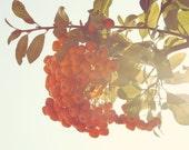 Orange berries, teal sky, colorful home art, floral style print, vintage sunshine, nature, green leaves, print, summer, fine art photograph