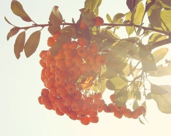 Orange berries, teal sky, colorful home art, floral style print, vintage sunshine, nature, green leaves, print, summer, fine art photograph