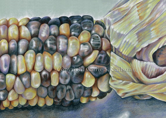 Indian Corn Drawing Indian Corn Print of