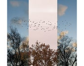 It's A New Day, digital image of birds in photo collage