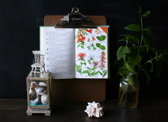 A Field Guide to Wildflowers Eastern and North Central Vintage From Nowvintage on Etsy