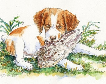 BRITTANY ORIGINAL WATERCOLOR on Ink Print Matted 11x14 Ready to Frame