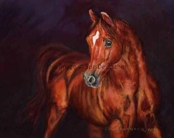 Arabian Horse stallion 11x14 PRINT