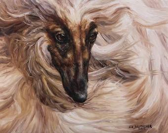Afghan Hound 11x14 print