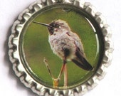 Hummingbird Bottle Cap Photo Art Pendant with Rubber Cord Necklace