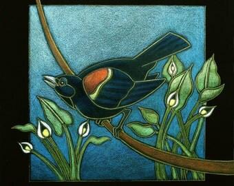 Redwing Blackbird, Water Arum-Minnesota Series
