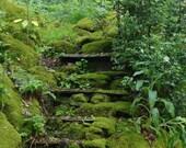 Photography  8x10 English Garden Fairy Fine Art Photography Emerald Moss Romantic steps hidden secret fern woodland abandoned magic