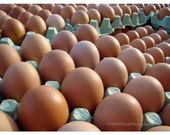Eggs Eggs Eggs    8x10 Photo 11x14 mat farm fresh market organic england yorkshire kitchen decor country breakfast cottage