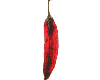 Hot and Dry  8x12 signed photo mat 11x14 Fiesta chili pepper spicy kitchen restaurant decor minimal red simple southwest texas mexican