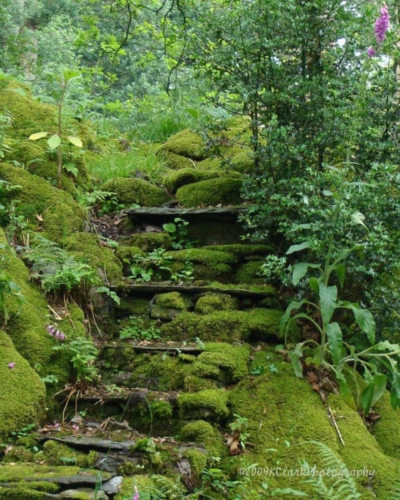 Photography  8x10 English Garden Fairy Fine Art Photography Emerald Moss Romantic steps hidden secret fern woodland abandoned magic