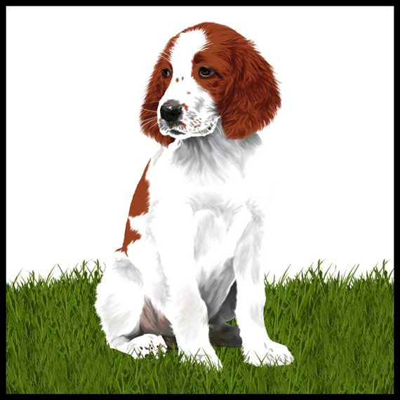 Irish Red and White Setter Puppy - 10x10in print