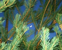 See the Moon through the Trees - 5x7 Fine Art Photograph - Lustre or Metallic