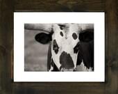 longhorn/framed