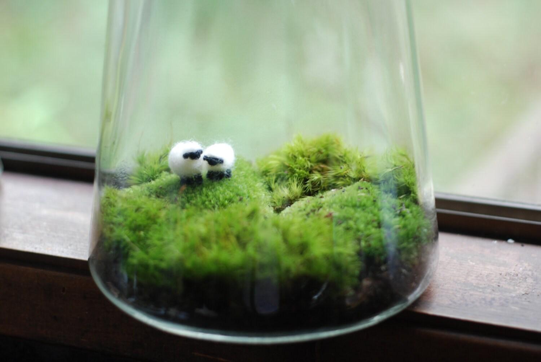 Как сделать экосистему в террариумах