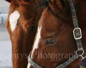 January, 11x14 Inch Fine Art Equestrian Photography Print, FREE Shipping, 25% of sales goes to University of Minnesota Equine Clinic