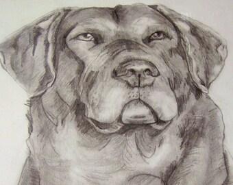 original art drawing pencil Labrador Retriever