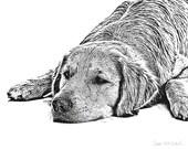 Resting Retriever - 11x14 Signed Art Print