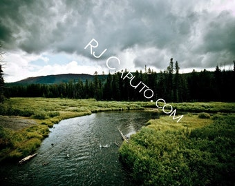 Aster Creek
