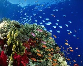 Blue Realm - Pipe Fish perfume oil - 5ml Pipe tobacco, sweet orange, mandarin, amber and sea water